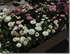 NE Flower Show Sneak Peak 2011 064