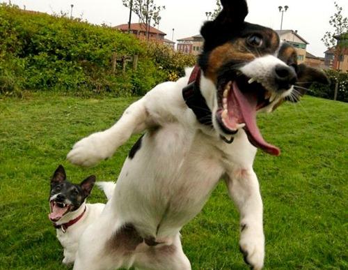 zany-dog