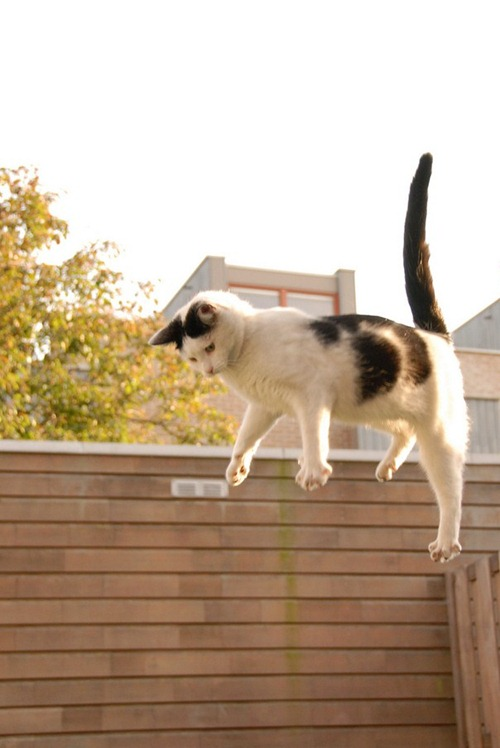cat-in-the-air