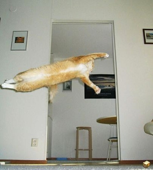 cat-can-fly
