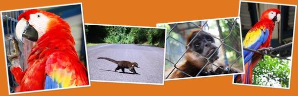 Ver Animales de Nicaragua