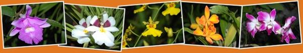 Ver Orquideas en Cobán
