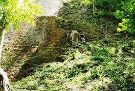 Tikal 032