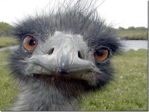 ostrich myspace