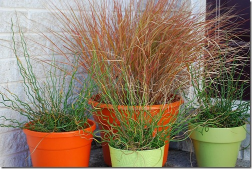 grasses porch