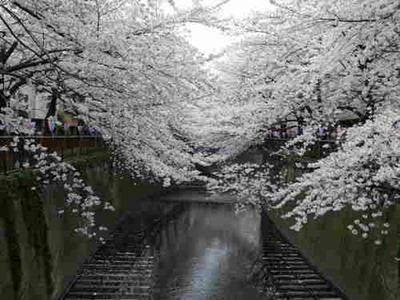 جمال الطبيعة في اليابان
