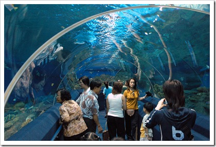 aquarium5xm3