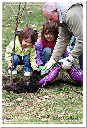 toddler activities: planting a tree