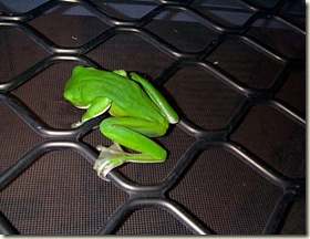 frog 02
