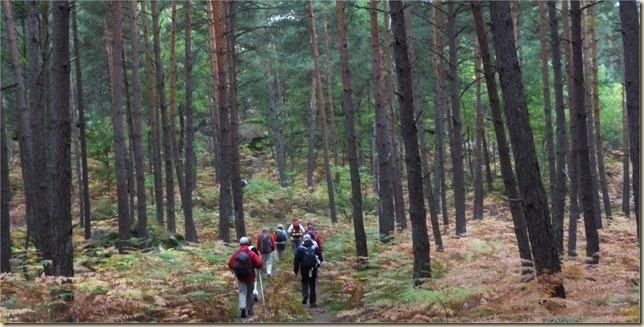 forêt Stevenson
