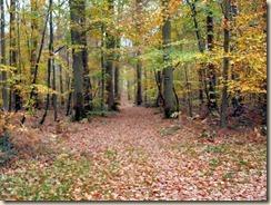 automne près de Bourron-Marlotte (1)