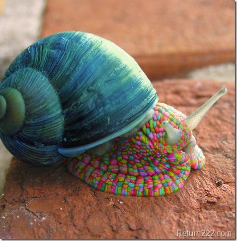 Psychedelic_Snail_by_deaddonkeysrule