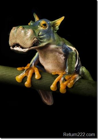 Hippofrog_1_by_oilcorner
