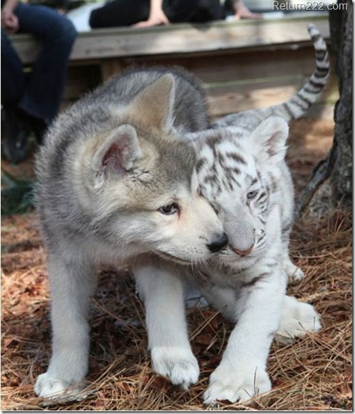 animales_bonitos (40)