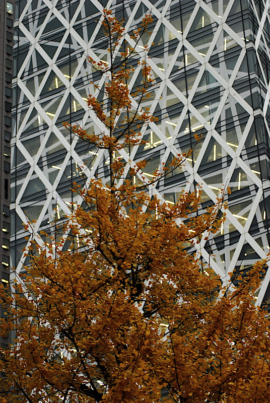 A ginko tree challenges Cocoon Tower