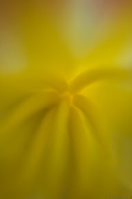 IMG_4716_PS_filtered_(c)_Bernhard_Plank.jpg