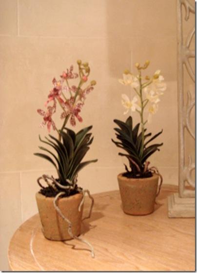 Indulge Decor- mini vanda orchid