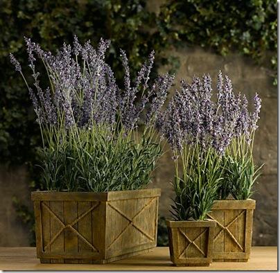 Restoration Hardware- faux lavender