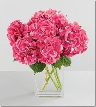 pink hydrangea by 416 florist dot com