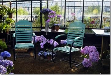 petersham nurseries hydrandgea