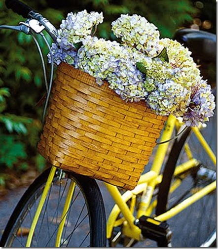 compulsively compiled hydrangea in bike basket