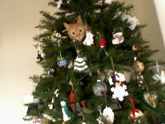 TUcker being naughty in the tree.  2009