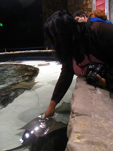 I touched a manta ray and a HAMMERHEAD SHARK!!!