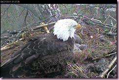 Eagles. jpg