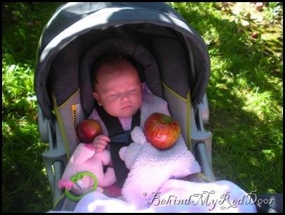 asleep in the orchard