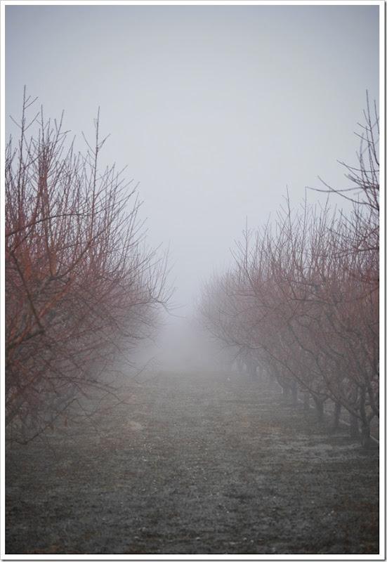 Orchard 2b