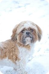 Snow Day-38