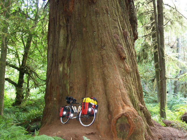 Giant Redwood with my bike up next to it to try to give some perspective on its size!