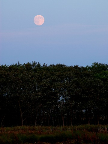 Moonrise_IMGP0505