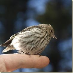JuvenileBird-6_edited-1