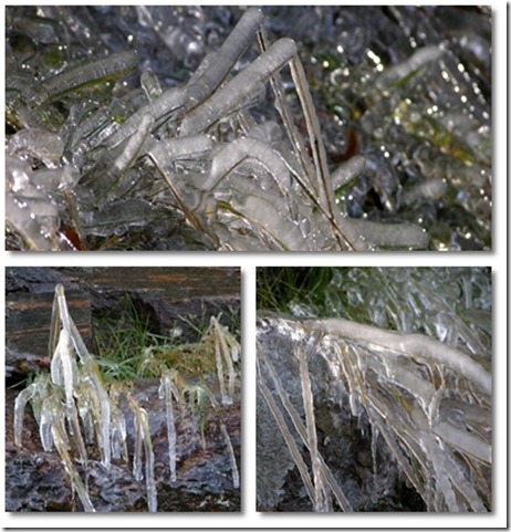 isgräs 1