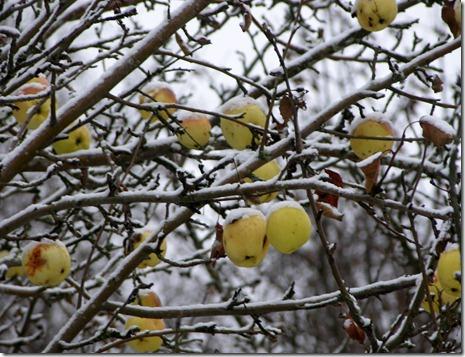 7   äpplen