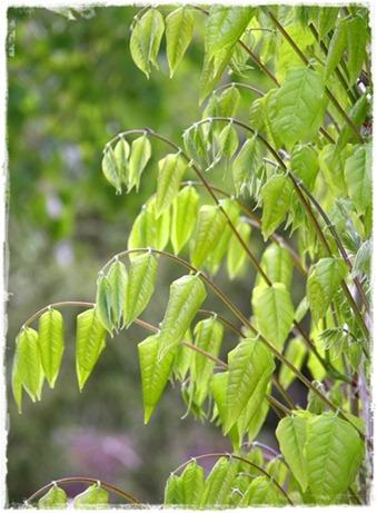 5 wisteria