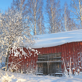 Idyllic barn by Mia Ikonen - Buildings & Architecture Other Exteriors ( old, winter, barn, snow, finland )