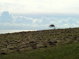 Solitary Tree in the Wind