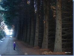 Pelas ruas de Puerto Manzano. Olha o tamanho dessas árvores. E são muitas. Além disso, há espaço suficiente para caminhar entre elas. Deve ser divertido.