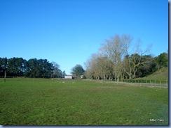 Verdes campos e céu azul