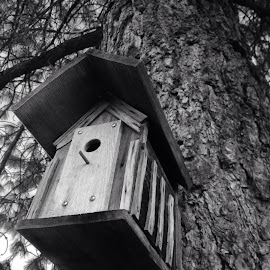 Old birdhouse by Michael Connolly - Novices Only Objects & Still Life (  )