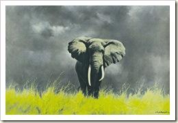 wiseoldelephant#2