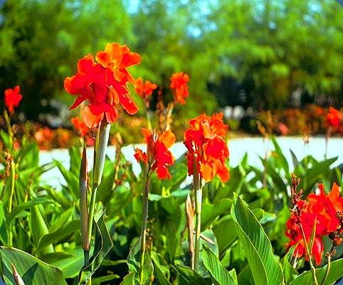 Flores do Campo (73)