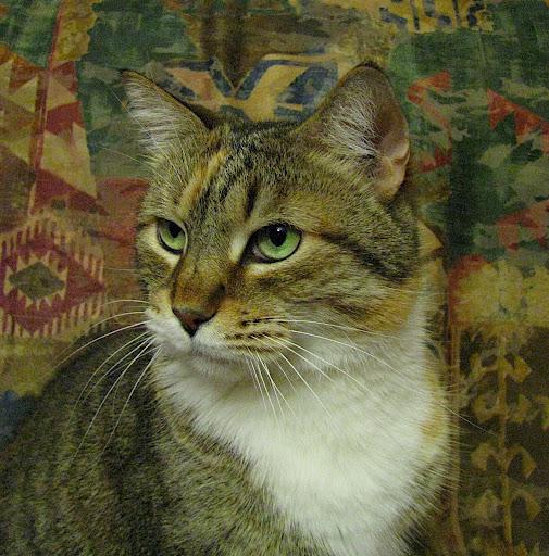 Josie the pussycat