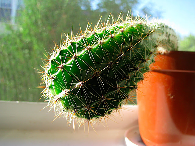 in-your-face cactus