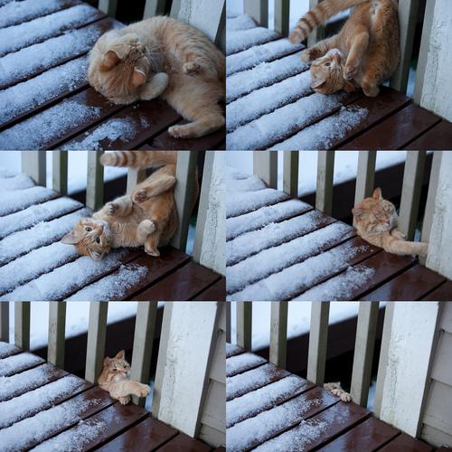 【画像】でんぐり返しした猫が大変なことに…