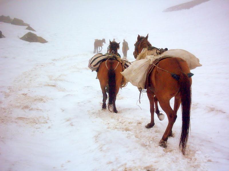 The Art Club Caucasus: Pack Horses, Caucasus Range