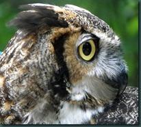 owlex (7)