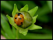 ladybug0510 (2)